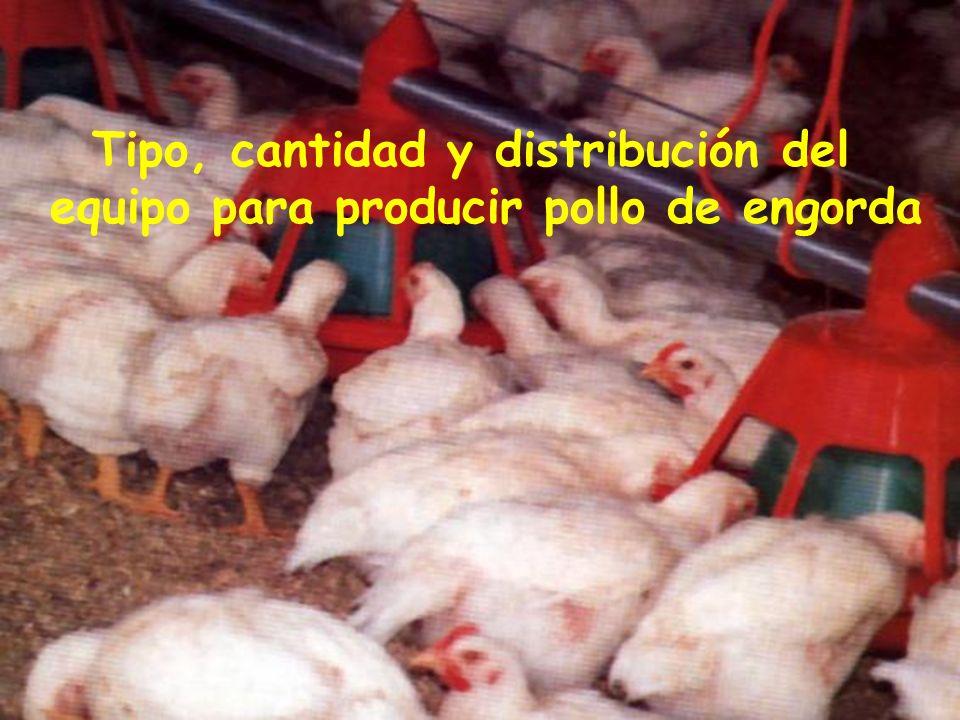 Tipo, cantidad y distribución del equipo para producir pollo de engorda