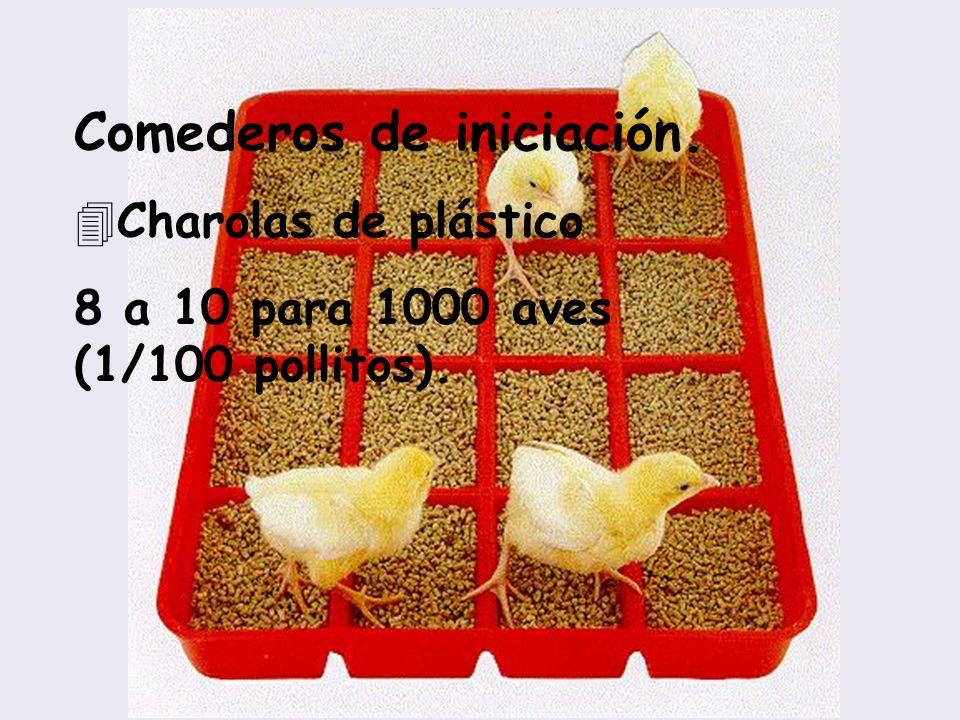 Comederos de iniciación. 4Charolas de plástico 8 a 10 para 1000 aves (1/100 pollitos).