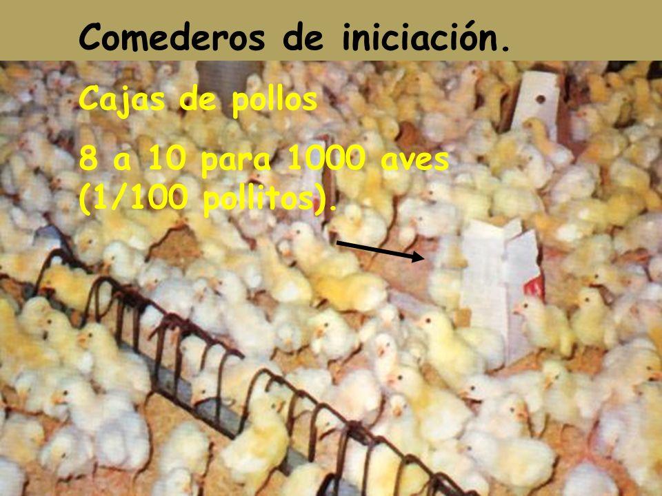 Comederos de iniciación. Cajas de pollos 8 a 10 para 1000 aves (1/100 pollitos).