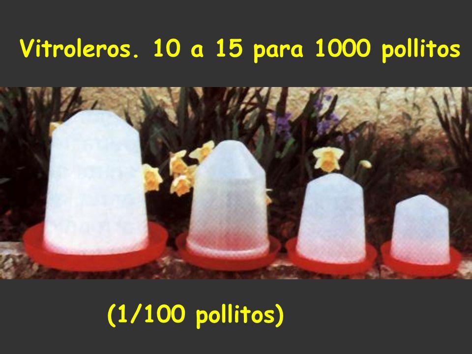 Vitroleros. 10 a 15 para 1000 pollitos (1/100 pollitos)