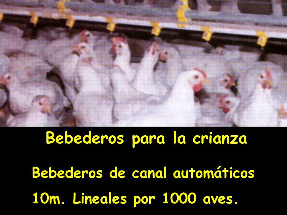 Bebederos para la crianza Bebederos de canal automáticos 10m. Lineales por 1000 aves.