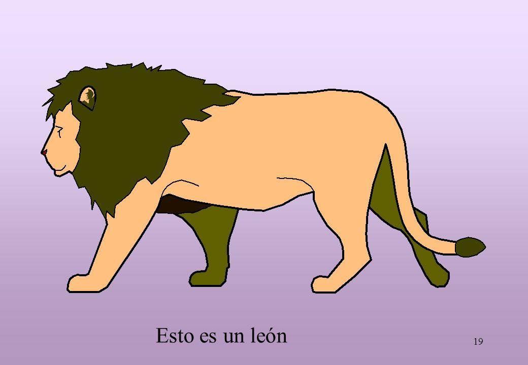 19 Esto es un león