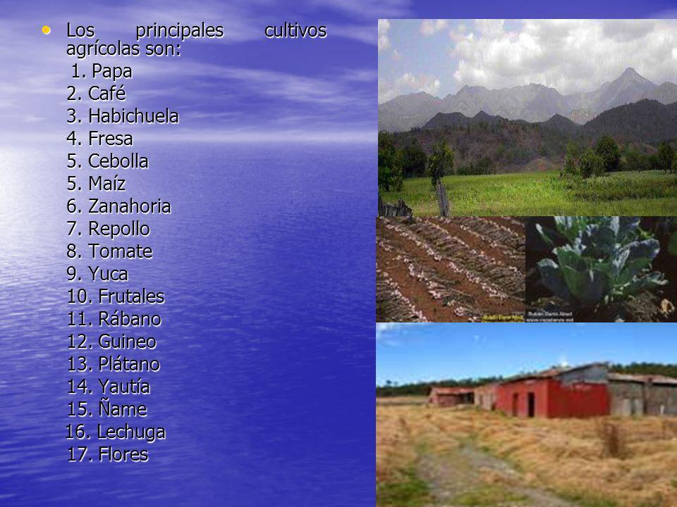 Los principales cultivos agrícolas son: Los principales cultivos agrícolas son: 1. Papa 1. Papa 2. Café 3. Habichuela 4. Fresa 5. Cebolla 5. Maíz 6. Z