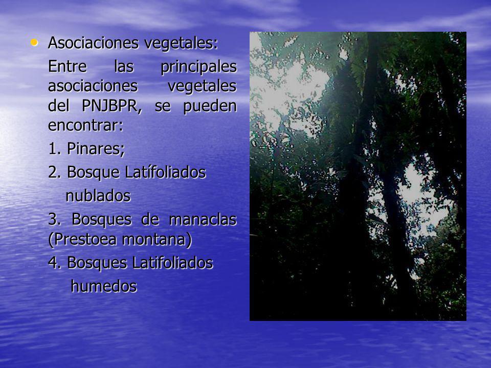 Asociaciones vegetales: Asociaciones vegetales: Entre las principales asociaciones vegetales del PNJBPR, se pueden encontrar: 1. Pinares; 2. Bosque La