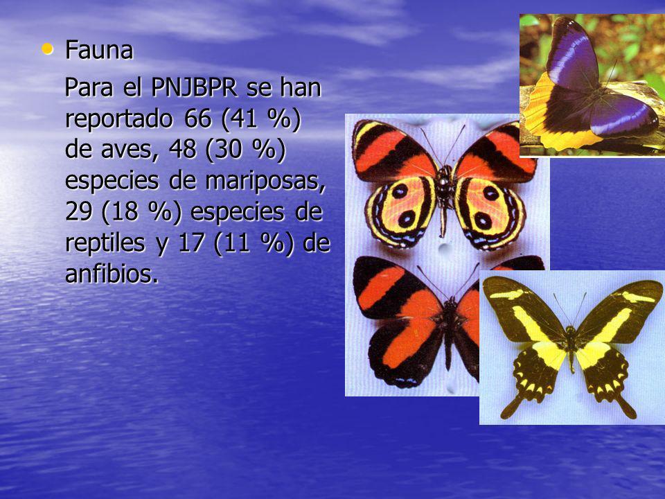 Fauna Fauna Para el PNJBPR se han reportado 66 (41 %) de aves, 48 (30 %) especies de mariposas, 29 (18 %) especies de reptiles y 17 (11 %) de anfibios