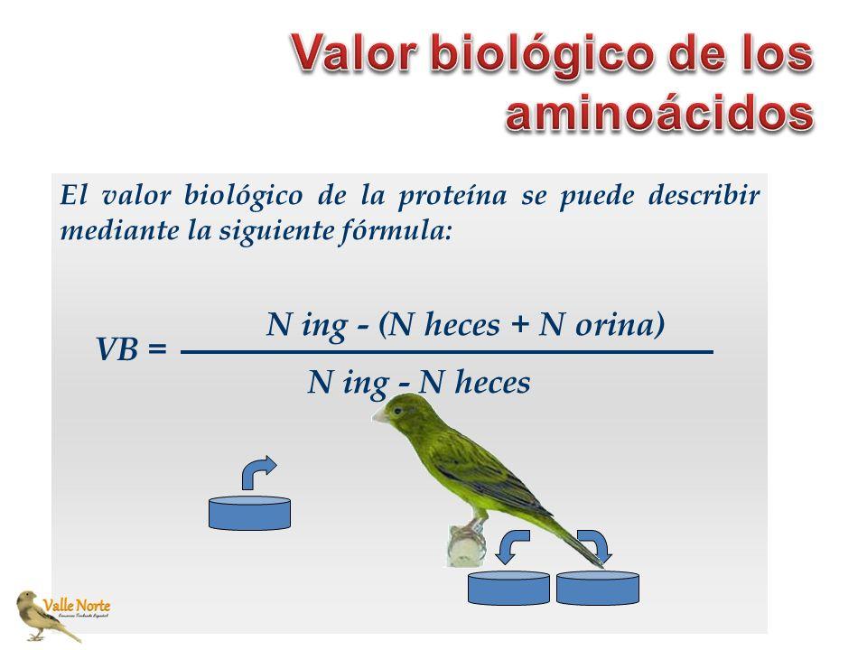 El valor biológico de la proteína se puede describir mediante la siguiente fórmula: VB = N ing - (N heces + N orina) N ing - N heces