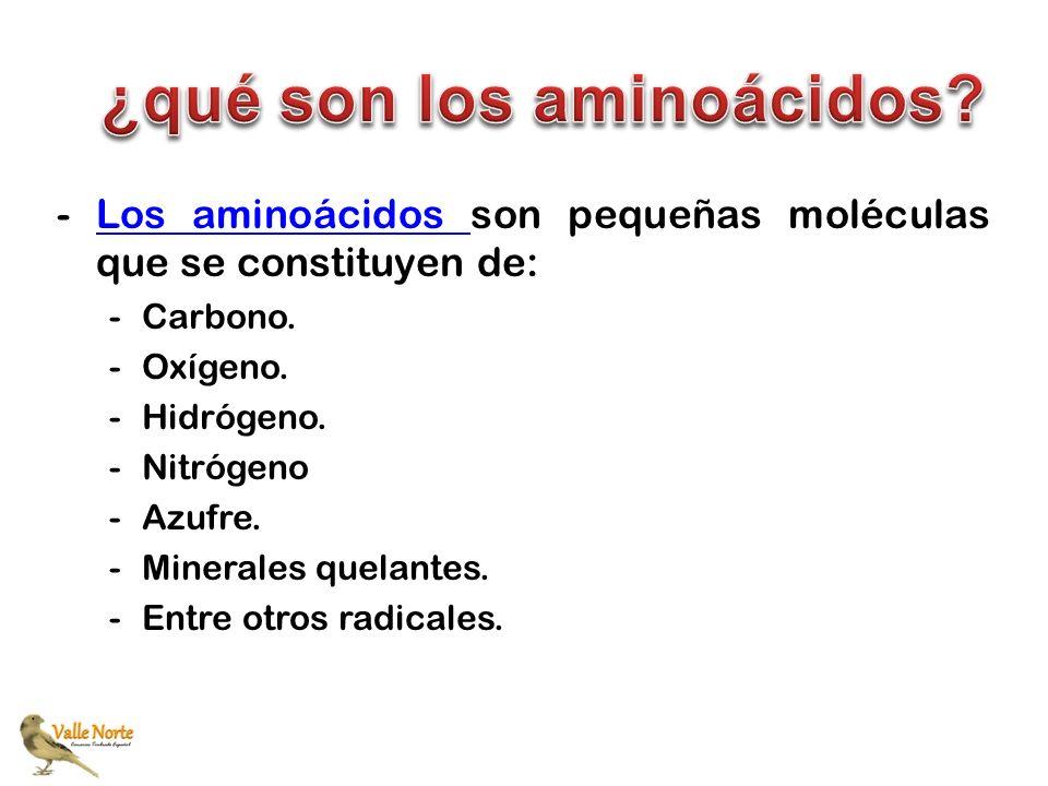 -Los aminoácidos son pequeñas moléculas que se constituyen de:Los aminoácidos -Carbono. -Oxígeno. -Hidrógeno. -Nitrógeno -Azufre. -Minerales quelantes