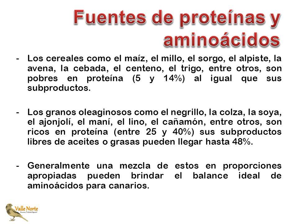 -Los cereales como el maíz, el millo, el sorgo, el alpiste, la avena, la cebada, el centeno, el trigo, entre otros, son pobres en proteína (5 y 14%) a