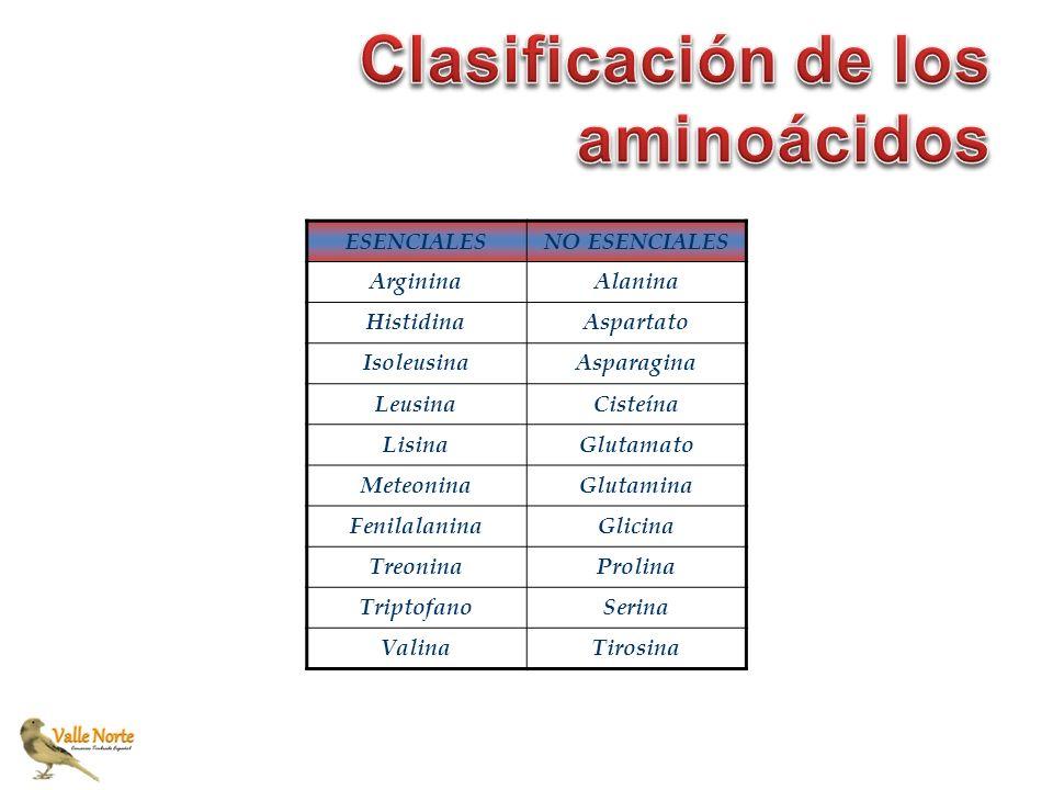 ESENCIALESNO ESENCIALES ArgininaAlanina HistidinaAspartato IsoleusinaAsparagina LeusinaCisteína LisinaGlutamato MeteoninaGlutamina FenilalaninaGlicina
