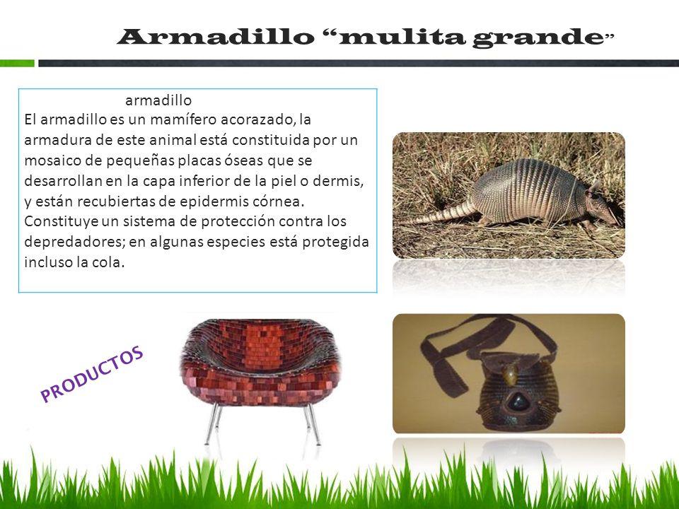 armadillo El armadillo es un mamífero acorazado, la armadura de este animal está constituida por un mosaico de pequeñas placas óseas que se desarrolla
