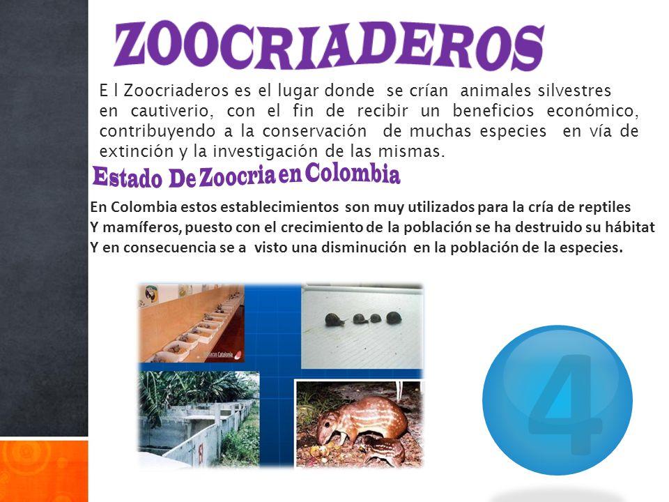 E l Zoocriaderos es el lugar donde se crían animales silvestres en cautiverio, con el fin de recibir un beneficios económico, contribuyendo a la conse