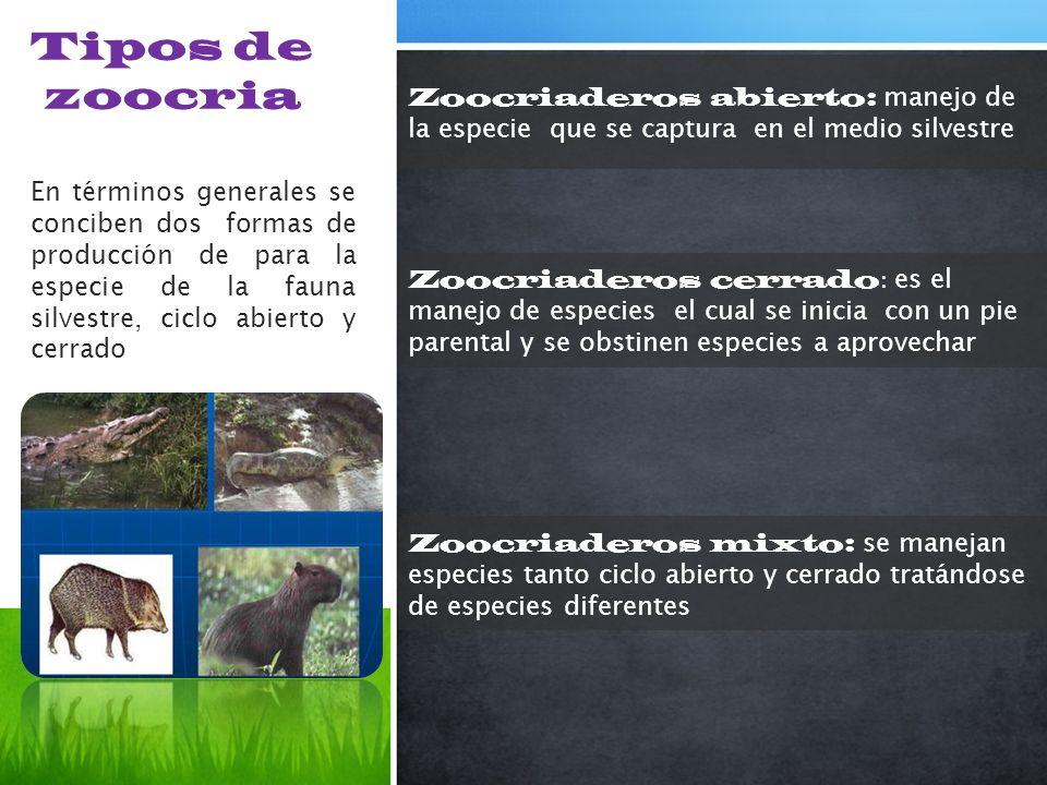 Tipos de zoocria Zoocriaderos abierto: manejo de la especie que se captura en el medio silvestre En términos generales se conciben dos formas de produ