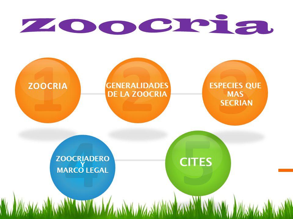 1ZOOCRIA 4ZOOCRIADEROY MARCO LEGAL 5 2 3 GENERALIDADES DE LA ZOOCRIA ESPECIES QUE MAS SECRIAN CITES