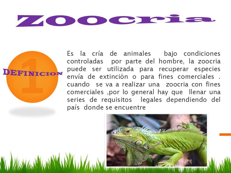1 Es la cría de animales bajo condiciones controladas por parte del hombre, la zoocria puede ser utilizada para recuperar especies envía de extinción