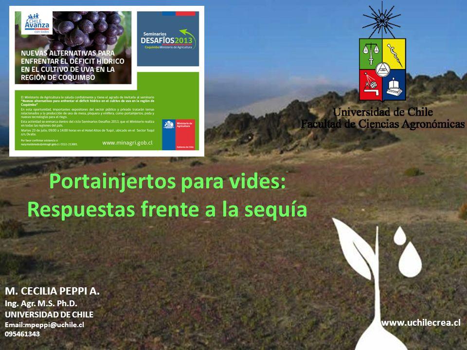 www.uchilecrea.cl M. CECILIA PEPPI A. Ing. Agr. M.S. Ph.D. UNIVERSIDAD DE CHILE Email:mpeppi@uchile.cl 095461343 Portainjertos para vides: Respuestas