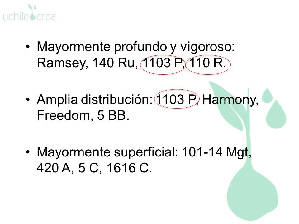 Mayormente profundo y vigoroso: Ramsey, 140 Ru, 1103 P, 110 R. Amplia distribución: 1103 P, Harmony, Freedom, 5 BB. Mayormente superficial: 101-14 Mgt