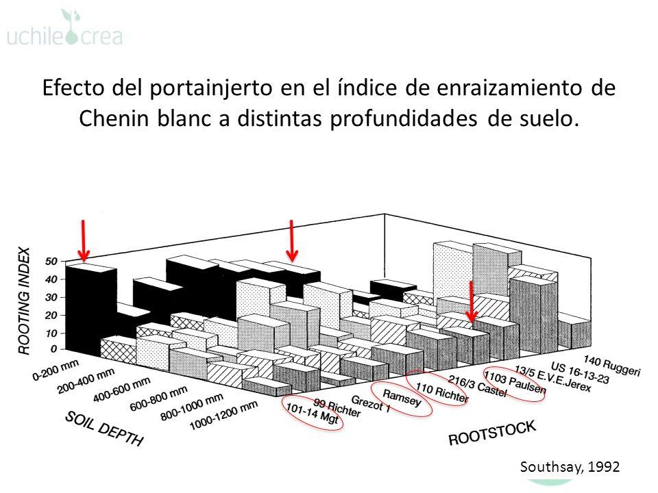 Efecto del portainjerto en el índice de enraizamiento de Chenin blanc a distintas profundidades de suelo. Southsay, 1992