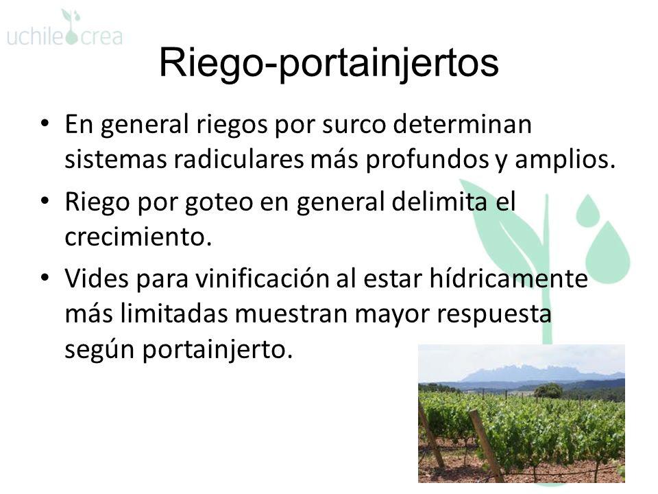 Riego-portainjertos En general riegos por surco determinan sistemas radiculares más profundos y amplios. Riego por goteo en general delimita el crecim