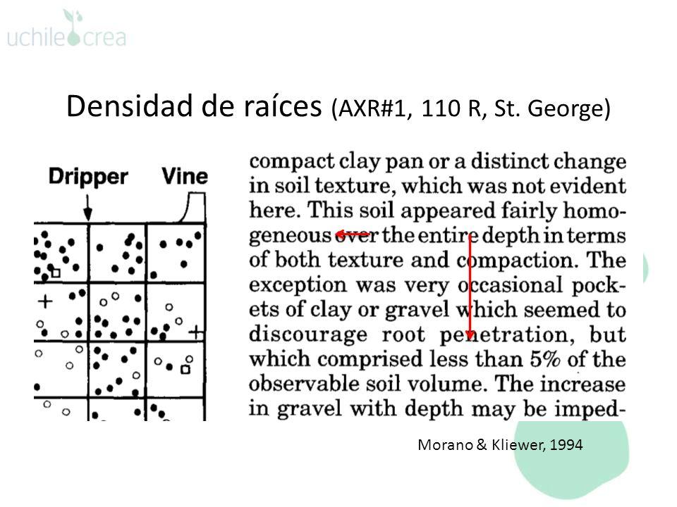 Densidad de raíces (AXR#1, 110 R, St. George) Morano & Kliewer, 1994
