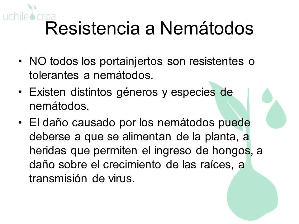 Resistencia a Nemátodos NO todos los portainjertos son resistentes o tolerantes a nemátodos. Existen distintos géneros y especies de nemátodos. El dañ