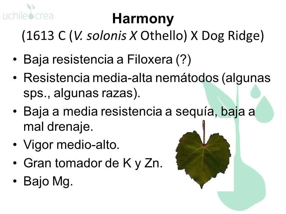 Harmony (1613 C (V. solonis X Othello) X Dog Ridge) Baja resistencia a Filoxera (?) Resistencia media-alta nemátodos (algunas sps., algunas razas). Ba