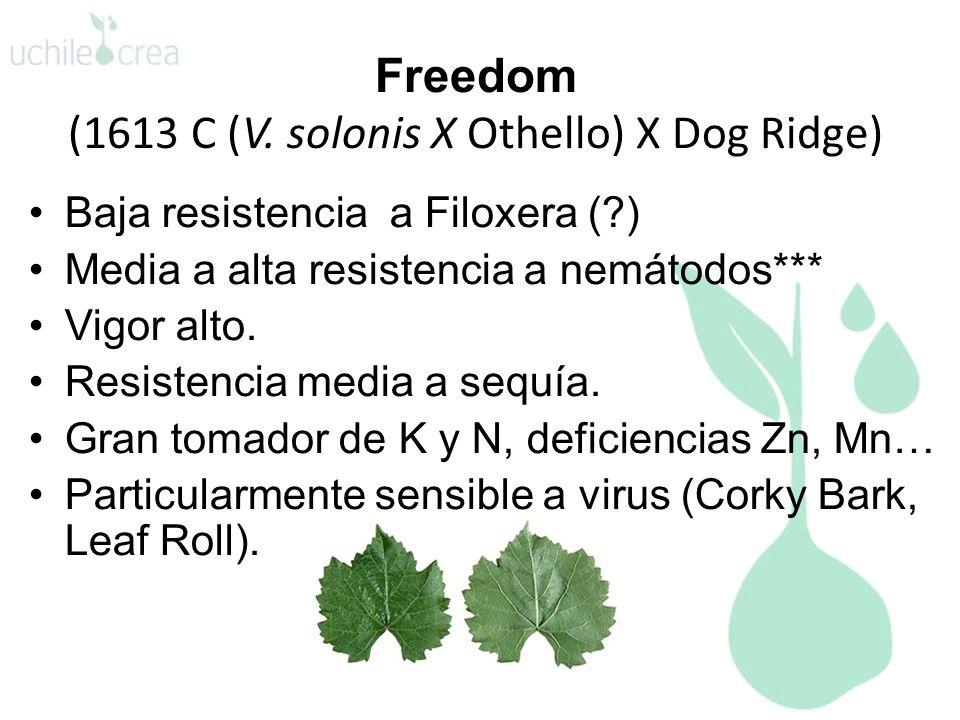 Freedom (1613 C (V. solonis X Othello) X Dog Ridge) Baja resistencia a Filoxera (?) Media a alta resistencia a nemátodos*** Vigor alto. Resistencia me