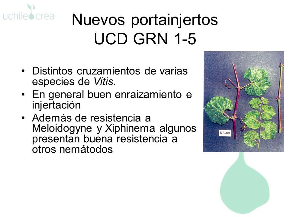 Nuevos portainjertos UCD GRN 1-5 Distintos cruzamientos de varias especies de Vitis. En general buen enraizamiento e injertación Además de resistencia