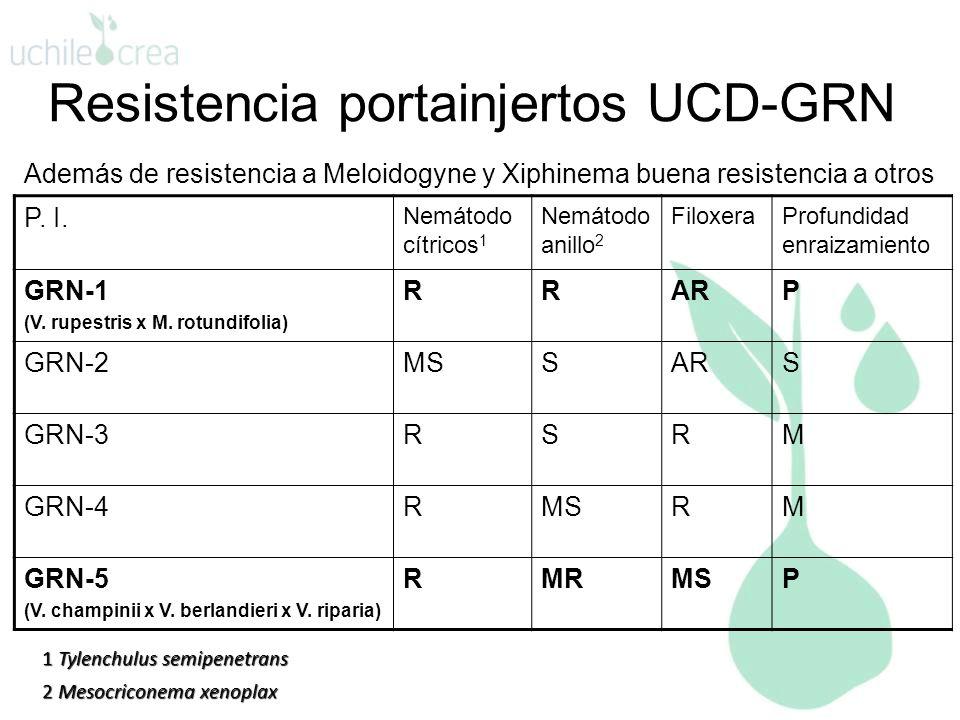 Resistencia portainjertos UCD-GRN P. I. Nemátodo cítricos 1 Nemátodo anillo 2 FiloxeraProfundidad enraizamiento GRN-1 (V. rupestris x M. rotundifolia)