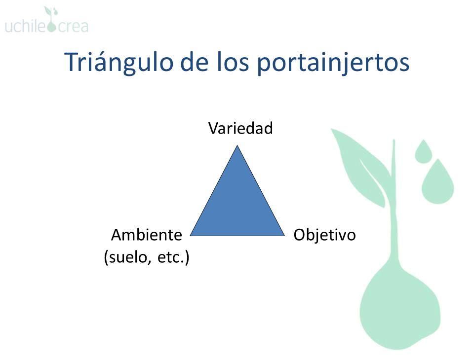 Triángulo de los portainjertos Variedad ObjetivoAmbiente (suelo, etc.)