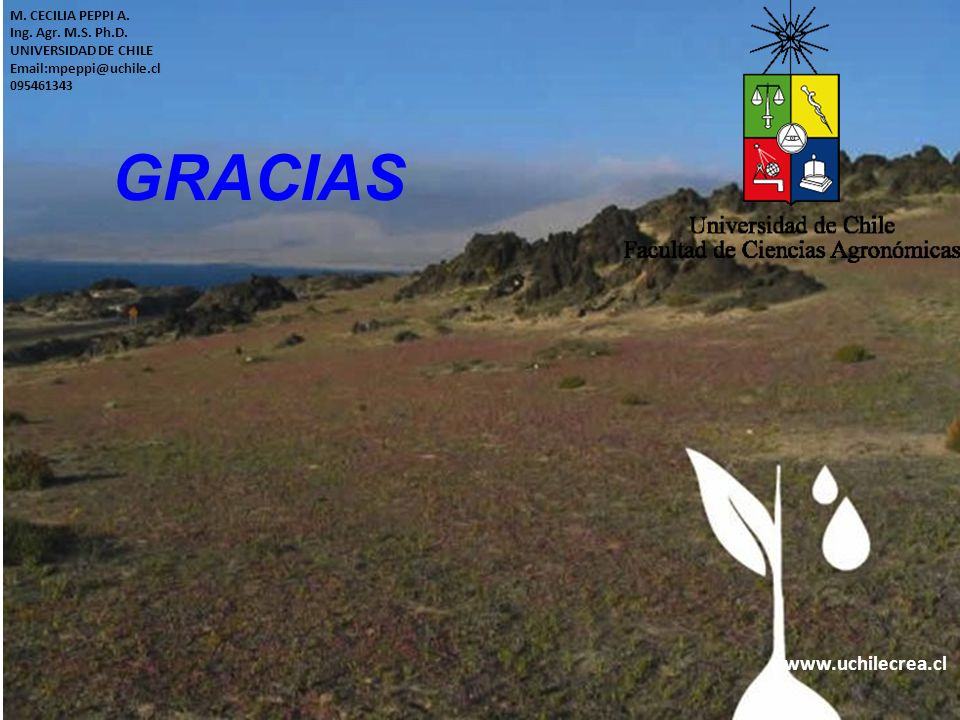 www.uchilecrea.cl M. CECILIA PEPPI A. Ing. Agr. M.S. Ph.D. UNIVERSIDAD DE CHILE Email:mpeppi@uchile.cl 095461343 GRACIAS