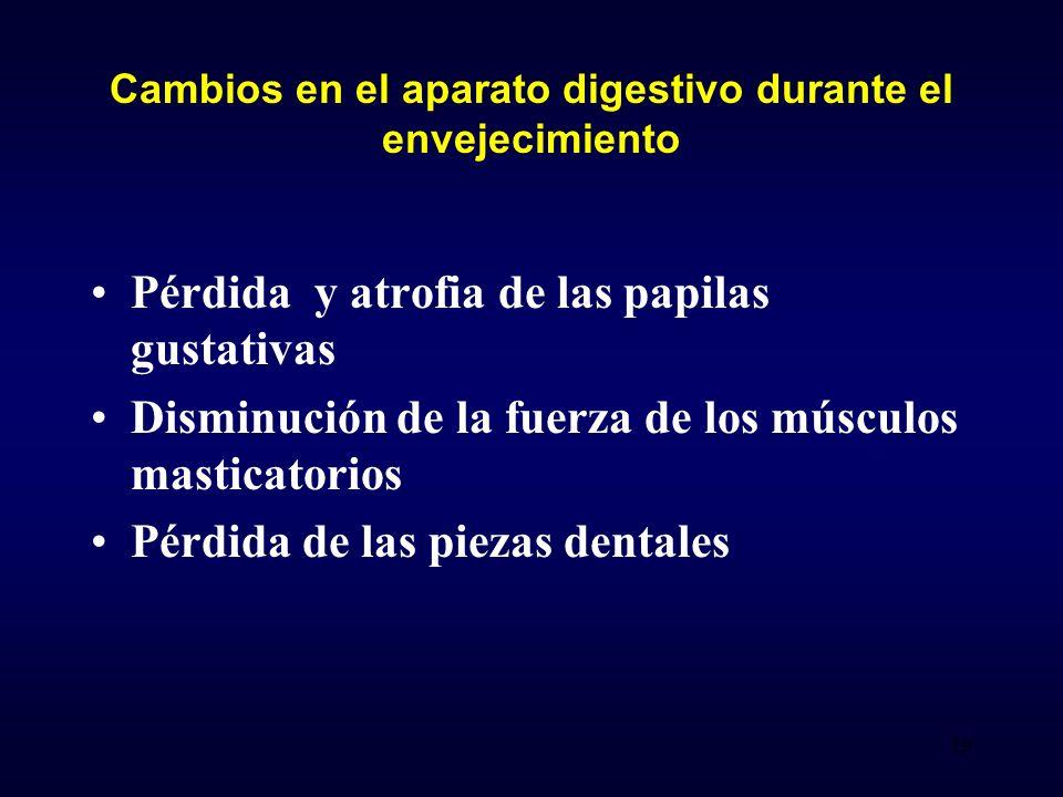 Pérdida y atrofia de las papilas gustativas Disminución de la fuerza de los músculos masticatorios Pérdida de las piezas dentales Cambios en el aparato digestivo durante el envejecimiento 19