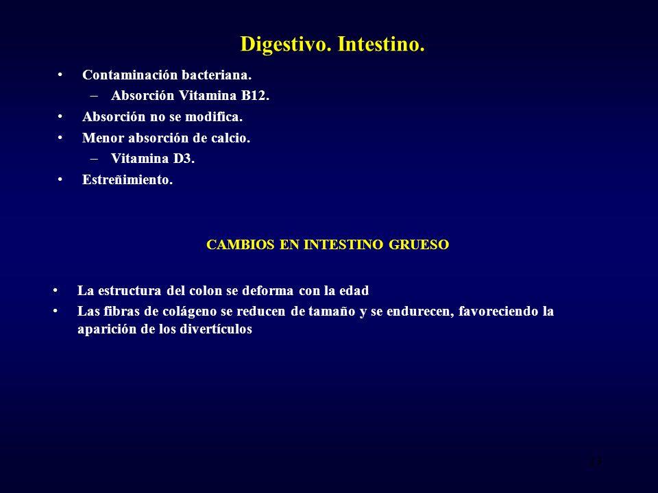 Digestivo.Intestino. Contaminación bacteriana. –Absorción Vitamina B12.