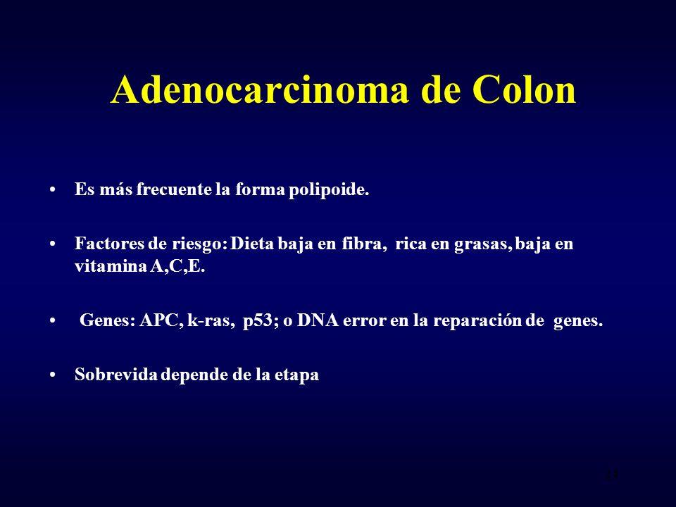 Adenocarcinoma de Colon Es más frecuente la forma polipoide. Factores de riesgo: Dieta baja en fibra, rica en grasas, baja en vitamina A,C,E. Genes: A