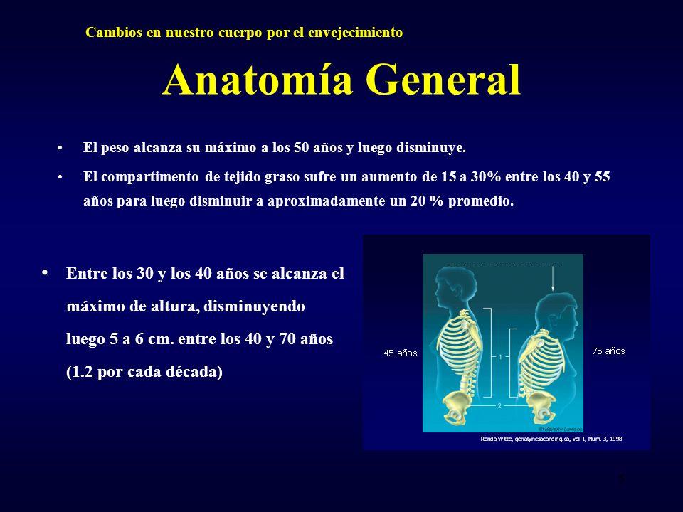 Anatomía General El peso alcanza su máximo a los 50 años y luego disminuye. El compartimento de tejido graso sufre un aumento de 15 a 30% entre los 40