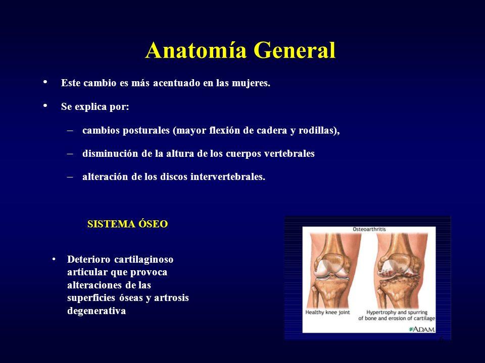 Anatomía General Este cambio es más acentuado en las mujeres. Se explica por: – cambios posturales (mayor flexión de cadera y rodillas), – disminución