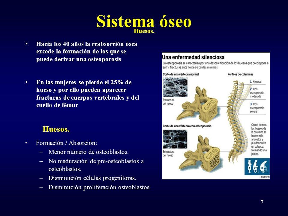 Sistema óseo Hacia los 40 años la reabsorción ósea excede la formación de los que se puede derivar una osteoporosis En las mujeres se pierde el 25% de hueso y por ello pueden aparecer fracturas de cuerpos vertebrales y del cuello de fémur Huesos.