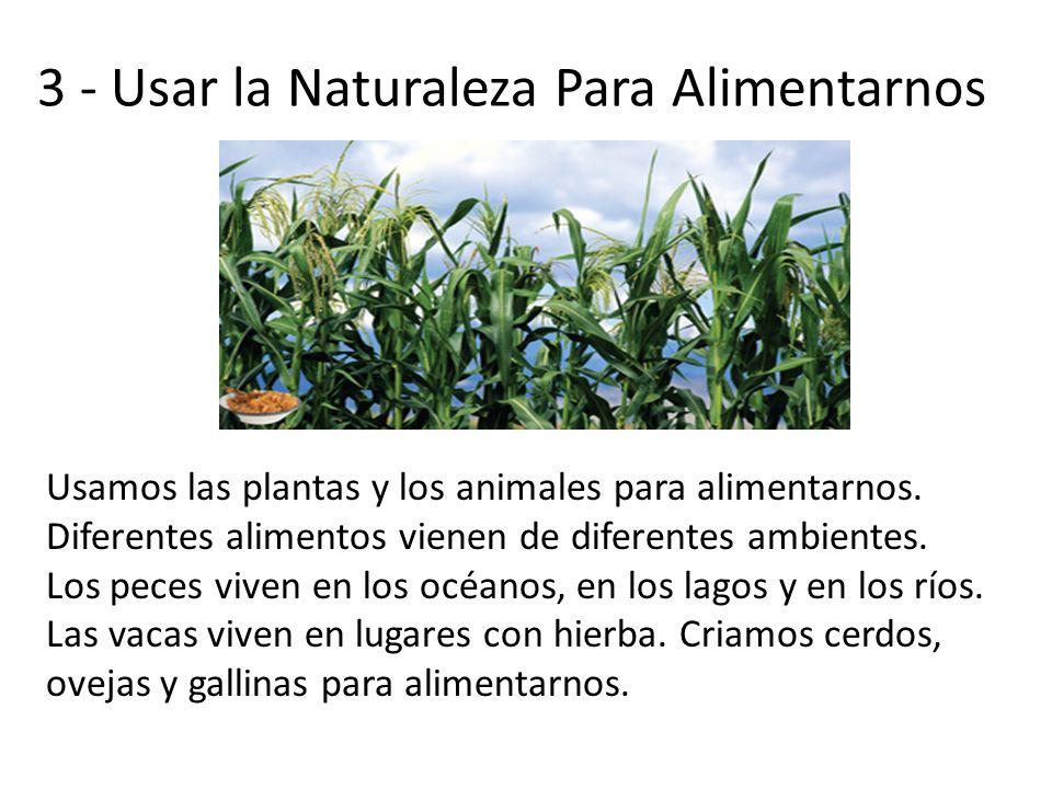 3 - Usar la Naturaleza Para Alimentarnos Usamos las plantas y los animales para alimentarnos. Diferentes alimentos vienen de diferentes ambientes. Los