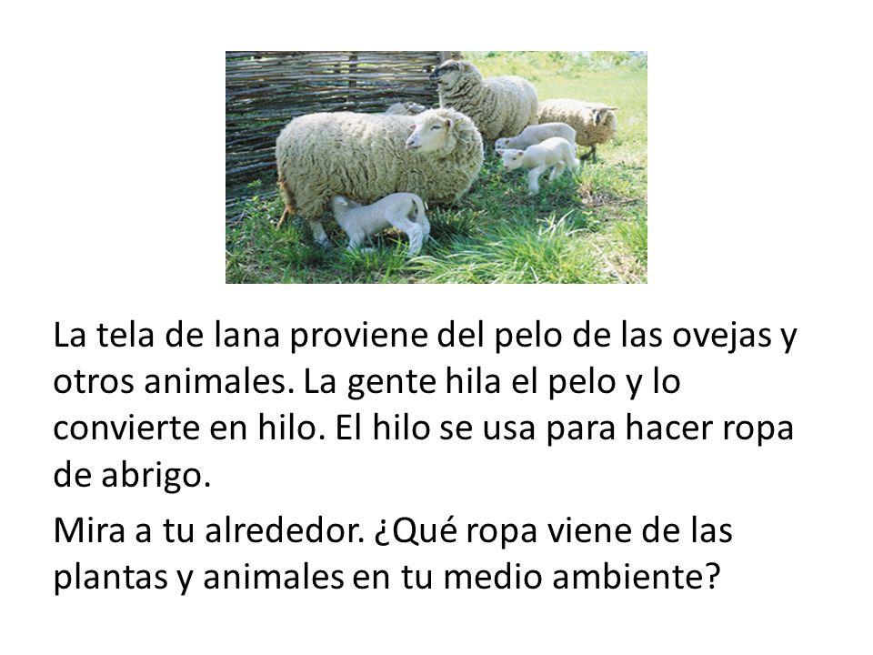 La tela de lana proviene del pelo de las ovejas y otros animales. La gente hila el pelo y lo convierte en hilo. El hilo se usa para hacer ropa de abri