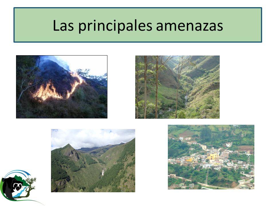Cohorte AZE Andes Especies AZE y ecosistemas seriamente amenazados Áreas Protegidas cerca paramos y bosques nublados