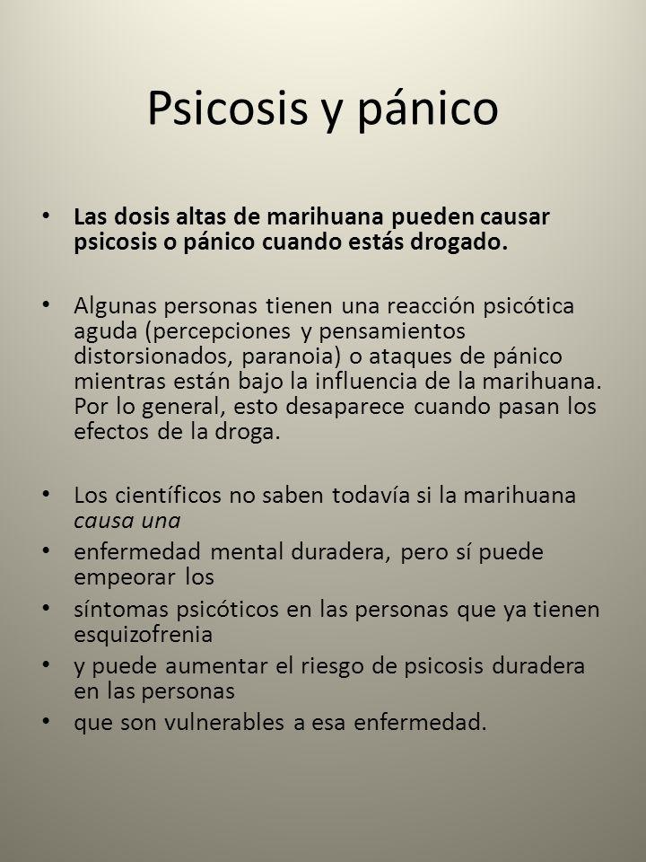 Psicosis y pánico Las dosis altas de marihuana pueden causar psicosis o pánico cuando estás drogado. Algunas personas tienen una reacción psicótica ag