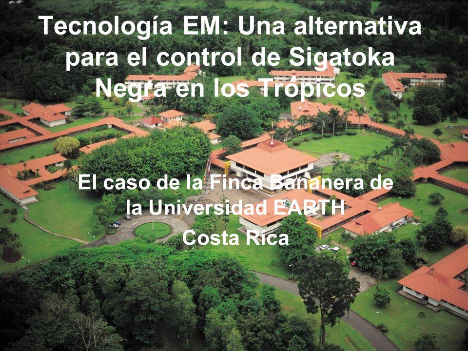 Tecnología EM: Una alternativa para el control de Sigatoka Negra en los Trópicos El caso de la Finca Bananera de la Universidad EARTH Costa Rica