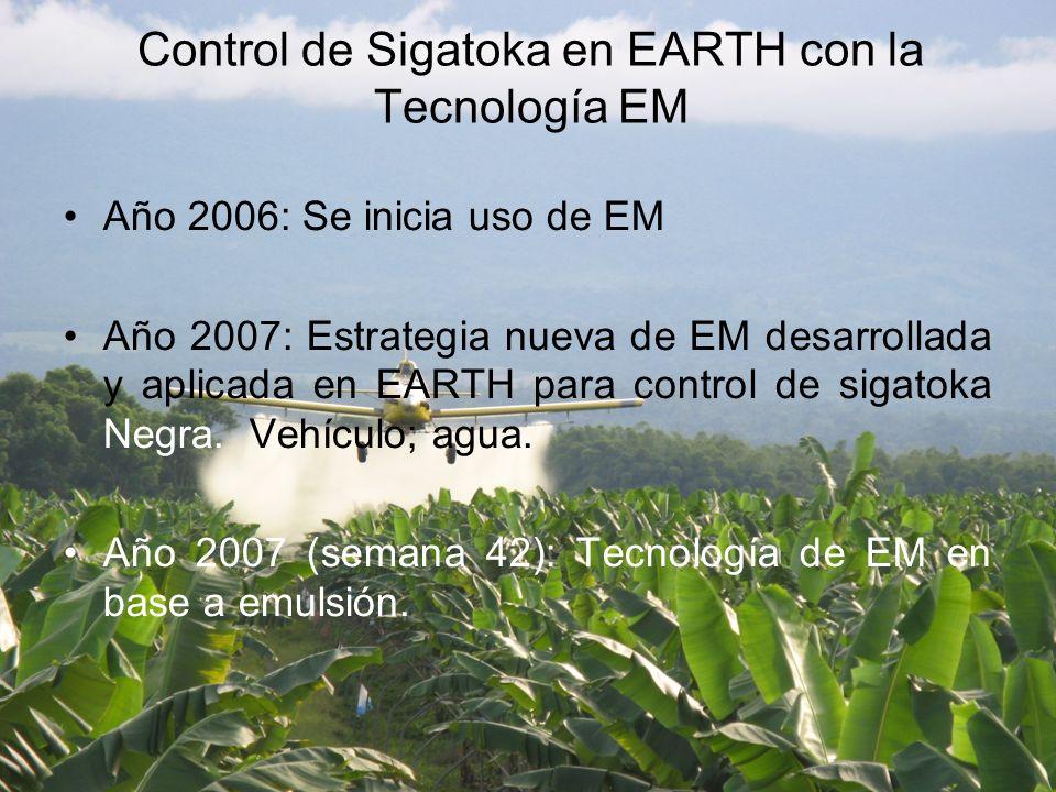 Año 2006: Se inicia uso de EM Año 2007: Estrategia nueva de EM desarrollada y aplicada en EARTH para control de sigatoka Negra.
