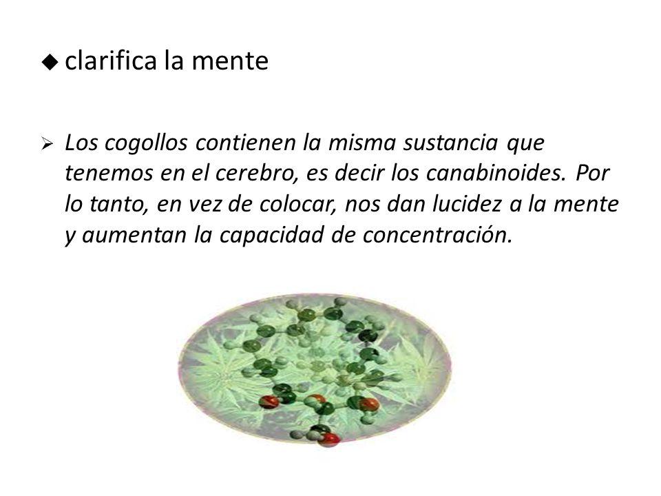 clarifica la mente Los cogollos contienen la misma sustancia que tenemos en el cerebro, es decir los canabinoides.