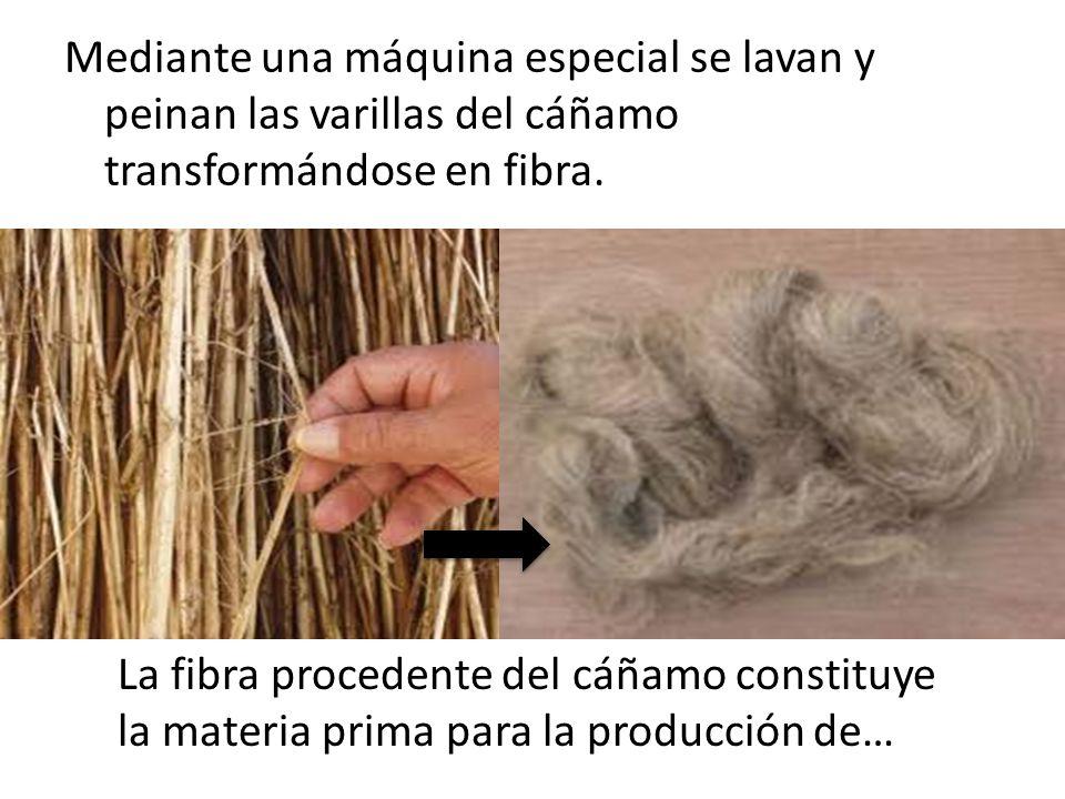 Mediante una máquina especial se lavan y peinan las varillas del cáñamo transformándose en fibra.