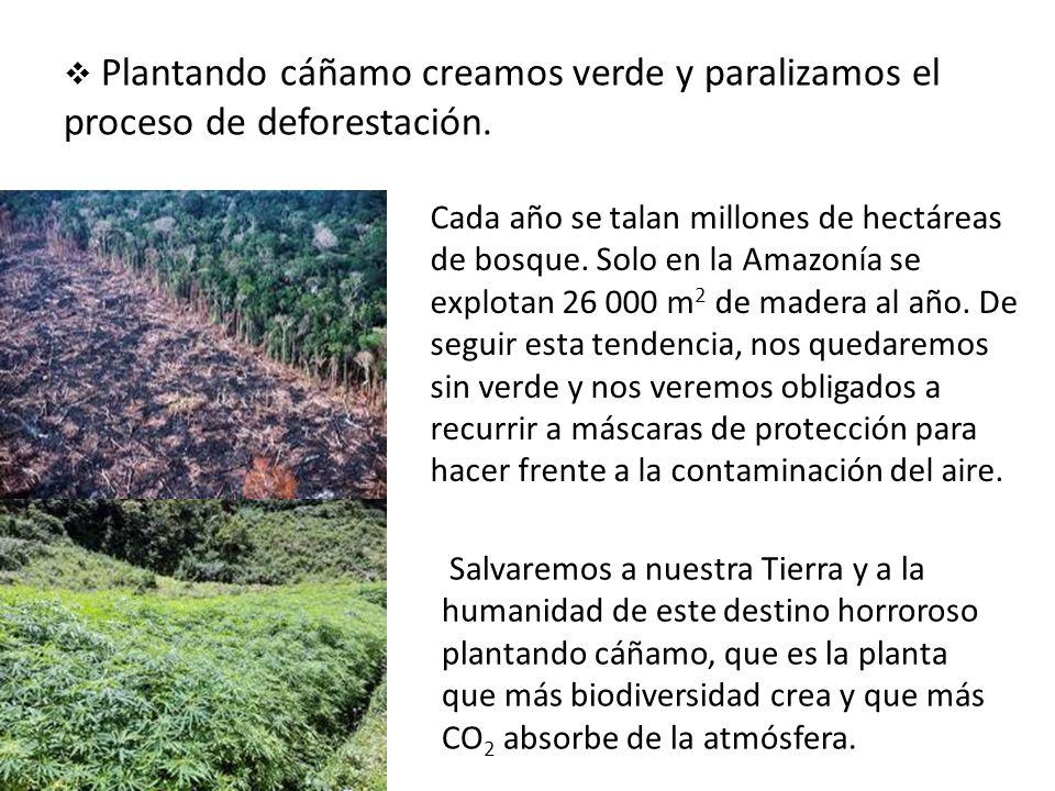 Plantando cáñamo creamos verde y paralizamos el proceso de deforestación.