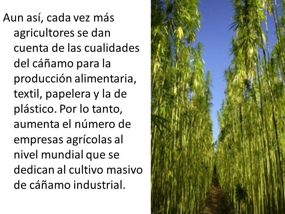 Aun así, cada vez más agricultores se dan cuenta de las cualidades del cáñamo para la producción alimentaria, textil, papelera y la de plástico.