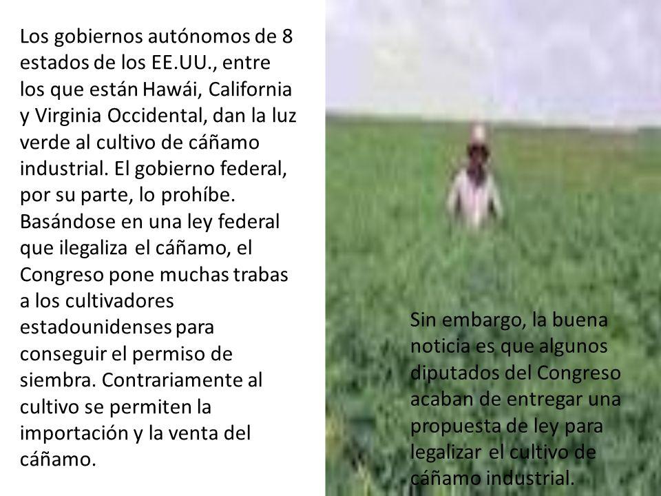 Los gobiernos autónomos de 8 estados de los EE.UU., entre los que están Hawái, California y Virginia Occidental, dan la luz verde al cultivo de cáñamo industrial.