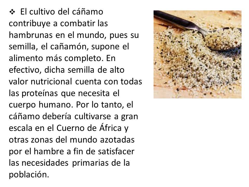 El cultivo del cáñamo contribuye a combatir las hambrunas en el mundo, pues su semilla, el cañamón, supone el alimento más completo.