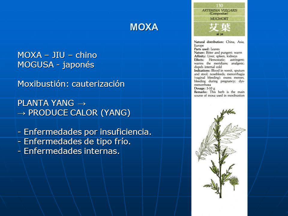 MOXA MOXA – JIU – chino MOGUSA - japonés Moxibustión: cauterización PLANTA YANG PLANTA YANG PRODUCE CALOR (YANG) PRODUCE CALOR (YANG) Enfermedades por