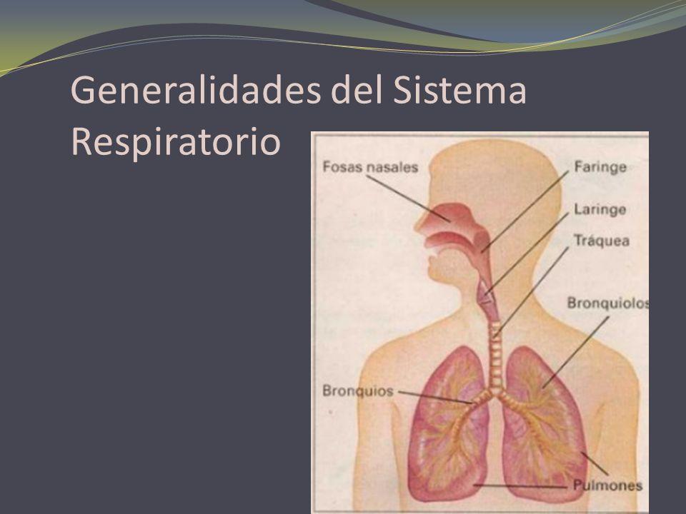 Generalidades del Sistema Respiratorio